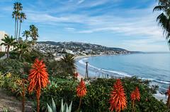 """Aloe"" me to share some of my vacation pics! (tquist24) Tags: california heislerpark lagunabeach nikon nikond5300 pacificocean aloevera beach clouds geotagged ocean palmtree palmtrees park sand seascape shore shoreline sky trees water unitedstates"
