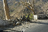 _DSC2477_DxO (Alexandre Dolique) Tags: d810 inde udaipur rajasthan singe monkey attaque attack india