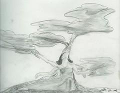 Knarled Tree's Dryad (Graphite)