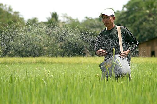 Philippines,Pinoy,Life,rural farm, man, Philippines, rice, rural, scene, traditional,fertilising working farm farmer
