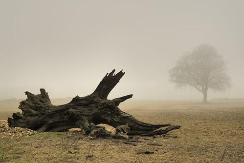 Ancestral roots - Ditcham Park