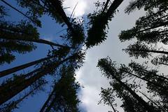 Montana in the Fall (Kathy~) Tags: mountains fall clouds landscape october montana hero winner cw fc 2007 october2007 treeslandscape photofaceoffwinner pfogold challengew