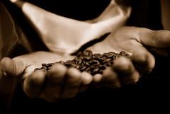 coffee ad (Sakuto) Tags: coffee sepia studio hands dof hand bokeh ad seed seeds advertisement 28