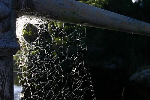 Cob web...