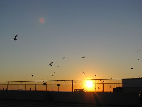 sunset seagulls
