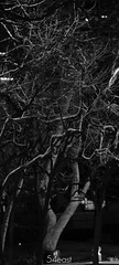 eerie (Rome Romz) Tags: white black ef70200mm f4l