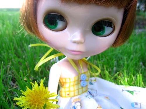Chiru and the only dandelion in the yard. Propiedad de Svohljott