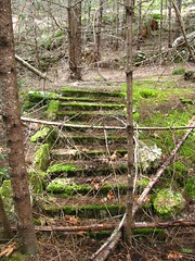 Woodland Stairs
