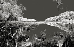 Historic Parker's Creek (Baab1) Tags: trees blackandwhite monochrome reflections shadows maryland swamps infrared grays southernmaryland swampgrass princefrederickmaryland calvertcountymaryland mywinners marylandstateparks theunforgettablepictures parkerscreek marylandscenics marylandcreeks