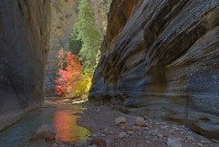 Around Every Bend (OneEighteen) Tags: autumn fall river rocks 500v20f canyon zionnationalpark zionpark narrows virginriver zionnarrows