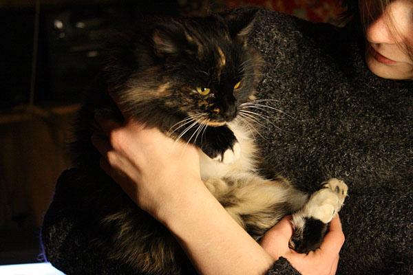 кошки 4