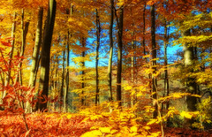 HerbstFeuer (Wolfgang Staudt) Tags: morning bridge blue autumn trees red sky sun color colour reflection building tree art fall nature water beautiful leaves sunshine clouds forest germany season landscape early buchenwald amazing nice pond nikon europa nikond70 decay framed tripod earlymorning saturday sigma frame stunning strae brcke wald hdr orton nicecolors saar saarland allerheiligen saarbrcken ludwigskirche buche saarlorlux sarre naturesfinest burbach abigfave wolfgangstaudt colourartaward sarrebrck goldstaraward vonderheydt