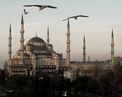 Istanbul Birds in Flight (Color) (Oberazzi) Tags: blue birds blind flight photographers istanbul mosque bluemosque myfavorites sultanahmet faved blindphotographers trkiyeturchia goldstaraward istanbuldawn