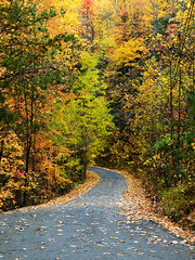 Autumn on the Road (E. Olson) Tags: road autumn trees fall nature colors leaves tennessee olympus fallfoliage winding gatlinburg 50200mm zuiko oly e510 zd