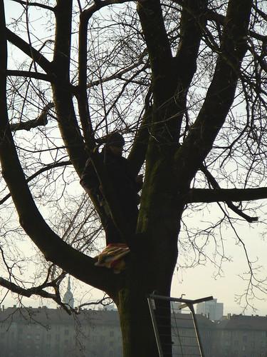 weitere besetzte Bäume (03)