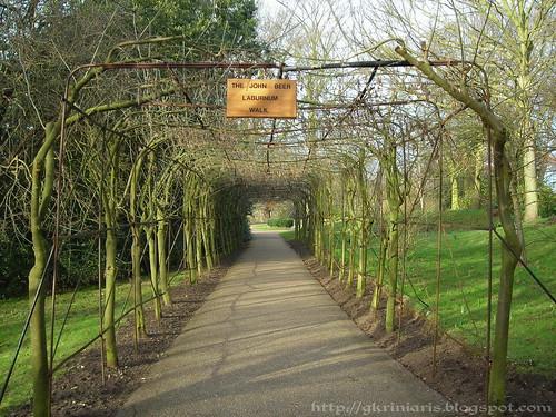 John Beer Laburnum Walk