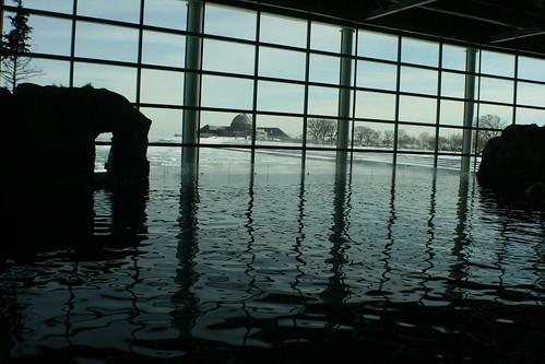 snow ice water aquarium frozen tank lakemichigan sheddaquarium whaletank