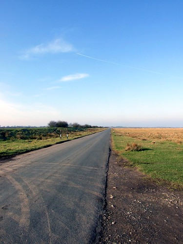 Road Through the Marshes