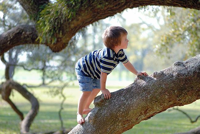 DSC_8206-Evan-tree-climbing