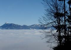 A sea of clouds........ (ubichan - Away A LOT :o() Tags: blue trees winter sun mountains alps nature clouds schweiz switzerland kantonluzern cantonlucerne ubichan salveanatureza thepilatus therigi