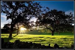 Evening Sunshine 2 (Chris Gin) Tags: park trees light sunset newzealand sky sun grass silhouette cornwall auckland nz ndfilter gndfilter neutraldensity graduatedfilter goldstaraward worldwidelandscapes