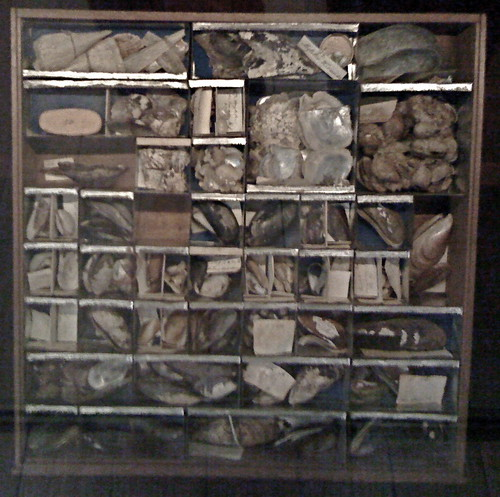 Shells and fossils collection