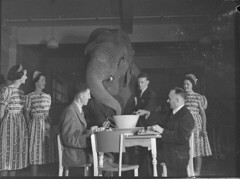 Elephant's tea party, Robur Tea Room, Sydney, 24 March 1939 / Sam Hood (State Library of New South Wales collection) Tags: indoor uniforms elephants waitresses elefant statelibraryofnewsouthwales samhood roburtearoom bussellbrosgrocers