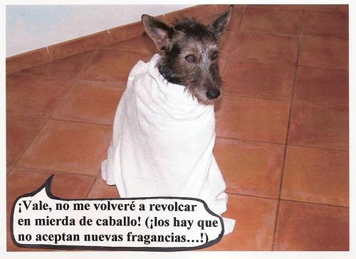 PERRA VIDA-VIDA PERRA