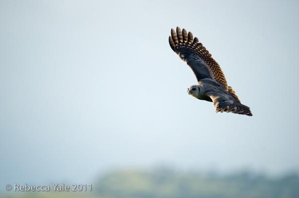 RYALE_Rwanda_Uganda_Safari-200