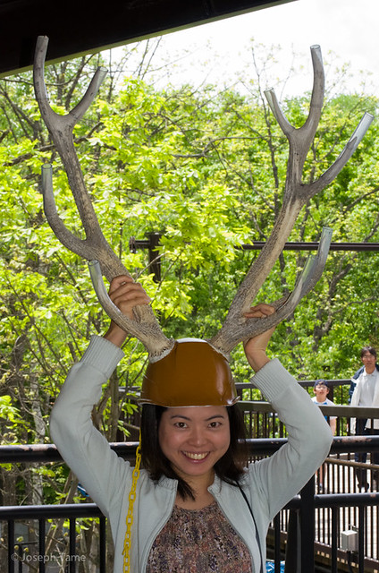 asahiyama_zoo-twinkle-antlers_6115