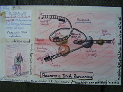 prokaryotic DNA replication (reindeer rob) Tags: replication cellbiology sketchcard prokaryotic sketchpostcards schaumseasyoutlines