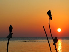 birds watch (i b u) Tags: sunset red sea sun holiday 3 birds reflections three interestingness silhouettes 123 321 noon oranges ibrahim crows 2008 ibu d15 newyearcountdown maldivianphotographer maldivianphotography abigfave velidhoo superaplus aplusphoto natoll ibrahimmohd ibumohd thatsclassy ibuphotoscom maldivesibusadventure maldivesphotography eidholidays noonvelidhu ibphotographycom maldivesphotographer