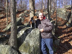 IM000065 (rpealit) Tags: dog pet color beagle animal friend molly tri companion