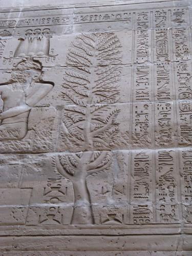 Egypt Xmas 2007 214