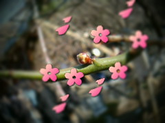 5. Re-Blur Effect and blossoms are out!