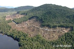 Logging roads and clearcuts begining on previously unlogged Banks Isl