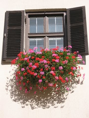 Innsbruck window (shaggy359) Tags: flowers window wall austria shutters windowbox innsbuck
