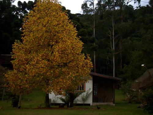 Outono em Canela