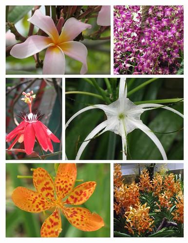 Flowers of Singapore 2