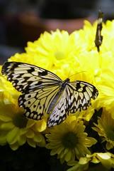 i Bm (Tran_Thaohien) Tags: flowers flower color cute love colors leaves loving cards leaf colorful smooth card excellent tender hoa yu p tnhyu thaohien hoap nhhoa peachofashot tranthaohien thiphoa