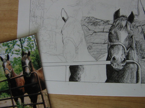 Horses' portrait progress