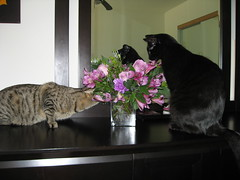 Mmm....These Smell Good!! (bergmanstuff) Tags: cats lex kal