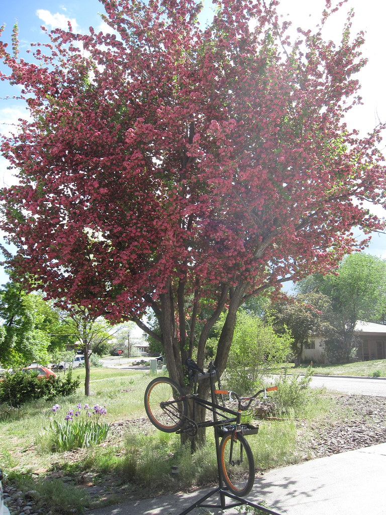 Hawthorn shade tree mechanic