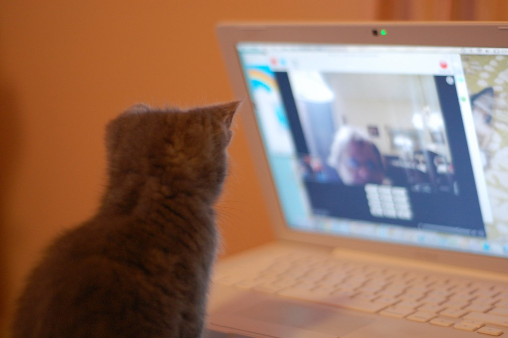 Mom and Kittens Skype