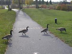 Nov. 3 walk in the park