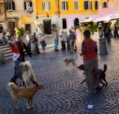 Soccer Dogs (moedonno) Tags: bill rizzo rome07
