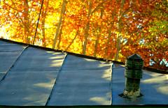 (Beshef) Tags: autumn red fall yellow sharif persian iran iranian ایران darakeh تهران پاییز shahram شریف فارسی ایرانیان پائیز درکه پرشین شهرام