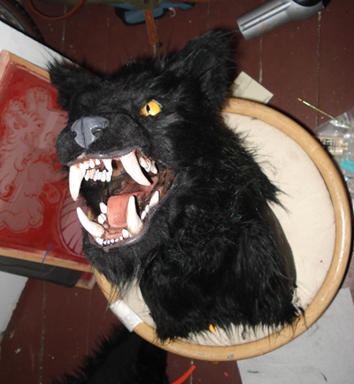 taxidermy 4