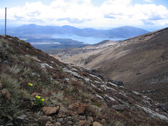 IMG_4015 (kenorrha) Tags: newzealand nznorthisland scenicsnotjustlandscapes