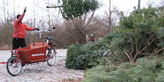 Christmas Tree, by bike